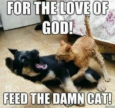 Cat - FOR THE LOVE OF GOD! FEED THE DAMN CAT!