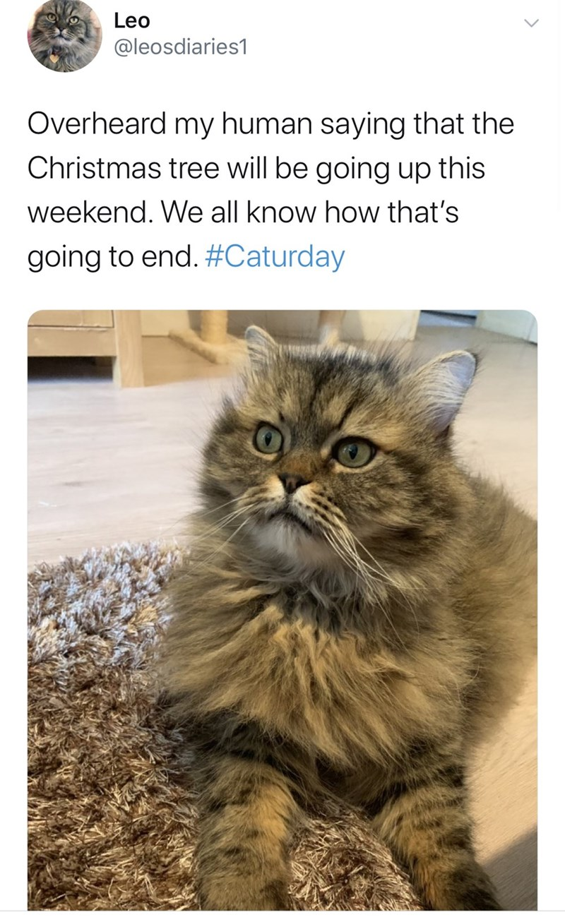 Cat - Leo @leosdiaries1 Overheard my human saying that the Christmas tree will be going up this weekend. We all know how that's going to end. #Caturday