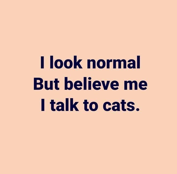 cat memes - 9403991296