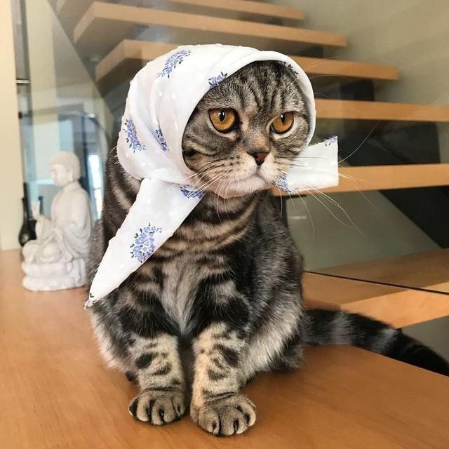 Cat - సె Fకి క