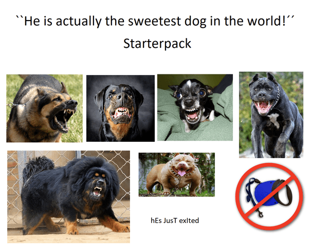 "Vertebrate - ""He is actually the sweetest dog in the world!"" Starterpack hEs JusT exlted"
