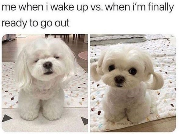 Dog - me when i wake up vs. when i'm finally ready to go out Cetem
