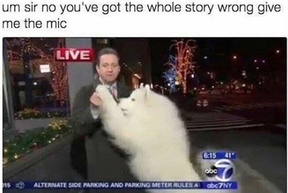 Photo caption - um sir no you've got the whole story wrong give me the mic LIVE 6:15 41 obc 15 ALTERNATE SIDE PARKING AND PARKING METER RULES A abc7NY