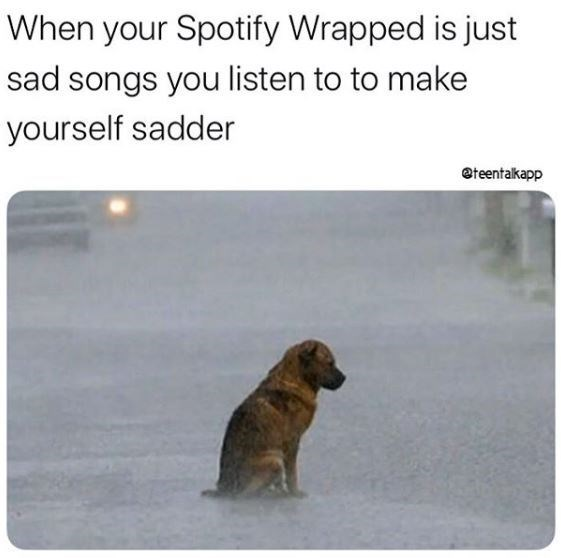 Dog - When your Spotify Wrapped is just sad songs you listen to to make yourself sadder @teentalkapp