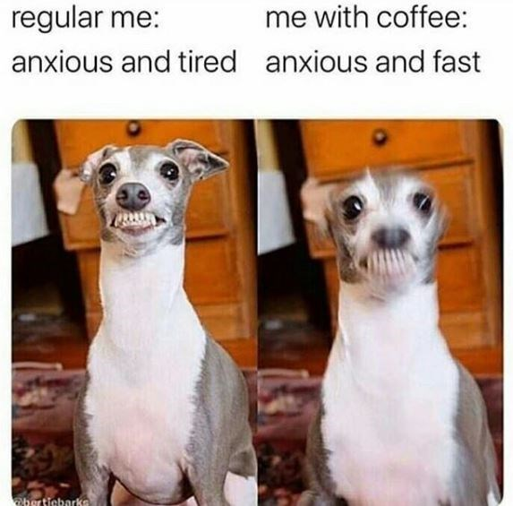 Dog - regular me: me with coffee: anxious and tired anxious and fast bertiebarks