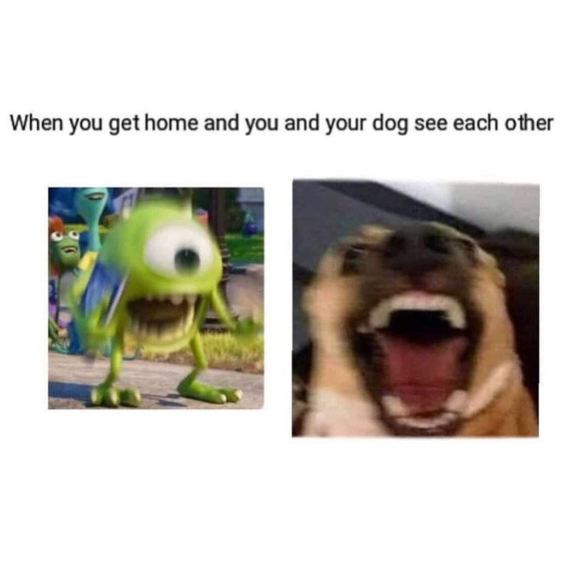 Nose - When you get home and you and your dog see each other