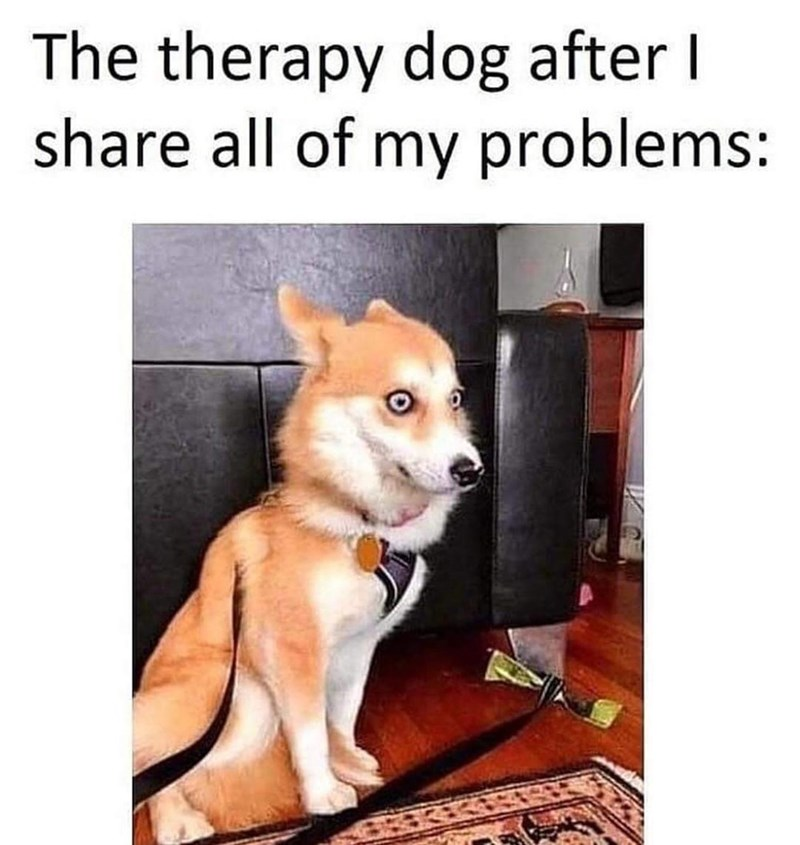 Dog - The therapy dog after I share all of my problems: