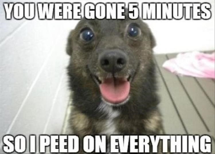 Mammal - YOU WERE GONE 5 MINUTES SO I PEED ON EVERYTHING