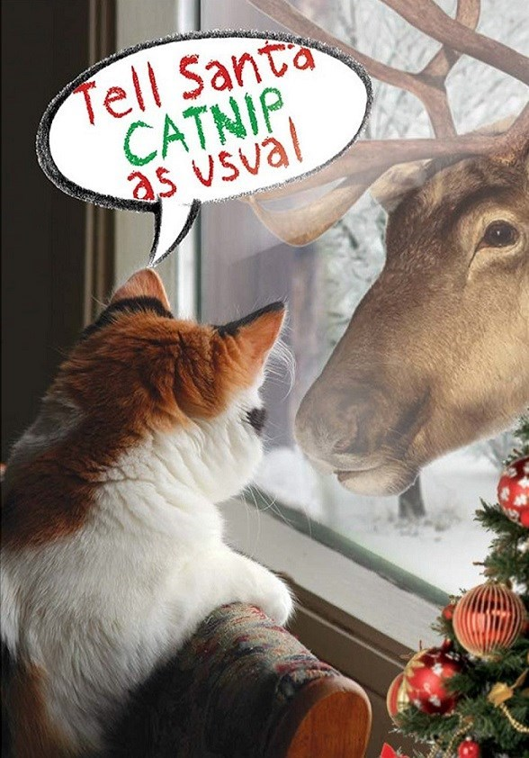 Christmas - Tell Santa CATNIP, as vsval