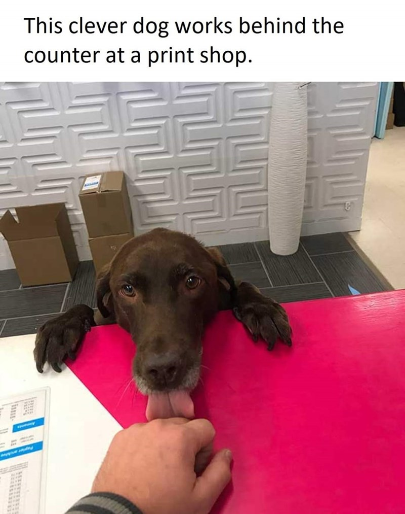 Dog - This clever dog works behind the counter at a print shop. Aimants