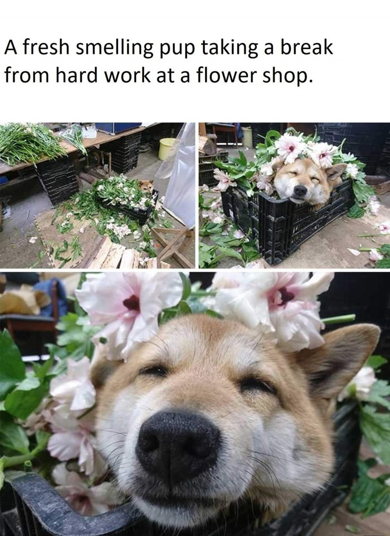 Dog - A fresh smelling pup taking a break from hard work at a flower shop.