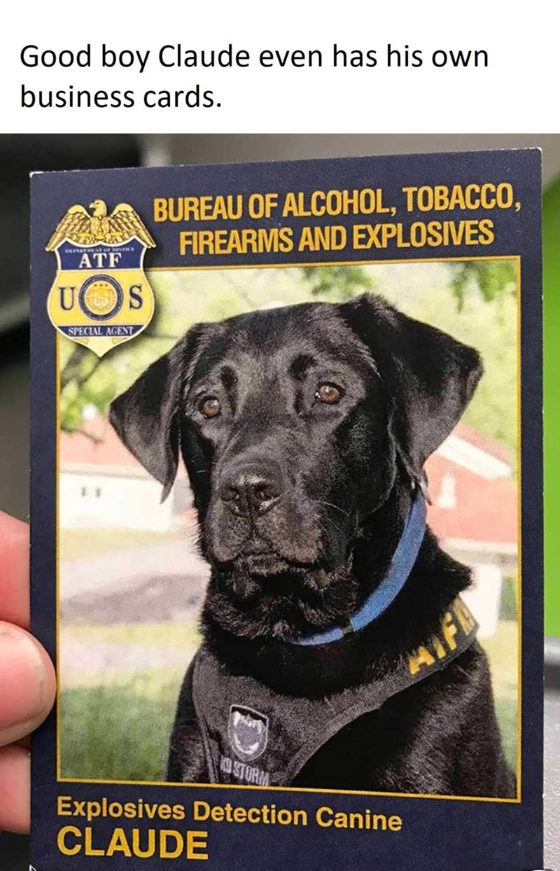 Dog - Good boy Claude even has his own business cards. BUREAU OF ALCOHOL, TOBACCO, FIREARMS AND EXPLOSIVES INARTA o ATF SPECIAL AGENT OSTORM Explosives Detection Canine CLAUDE