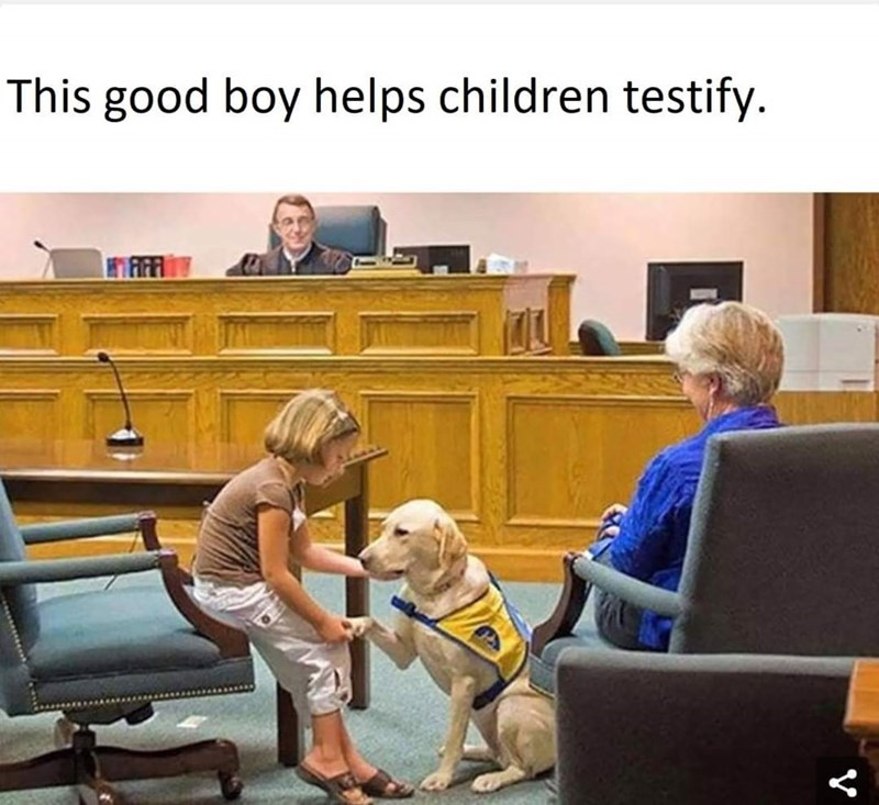 Conversation - This good boy helps children testify.