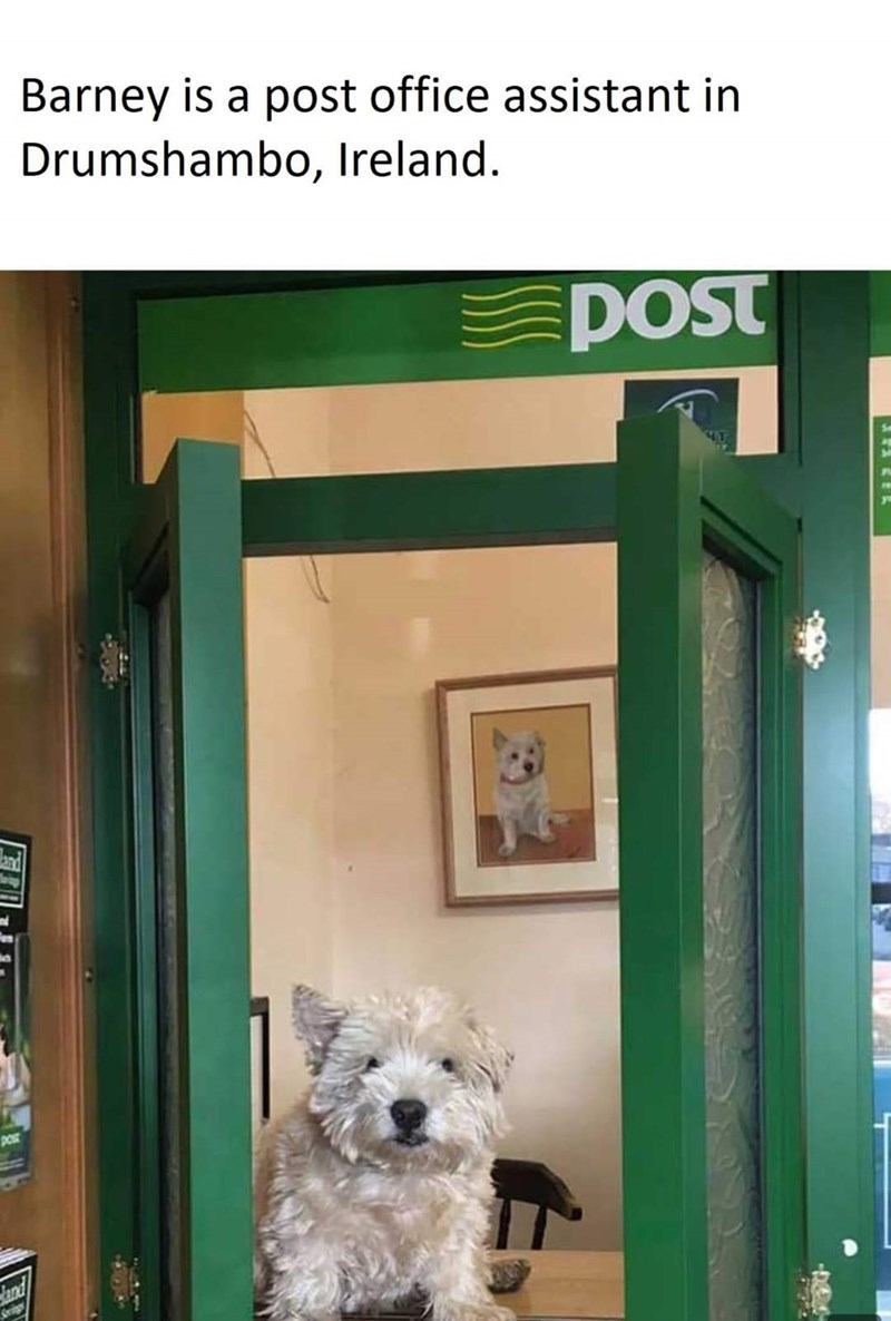 Dog - Barney is a post office assistant in Drumshambo, Ireland. POst POT and