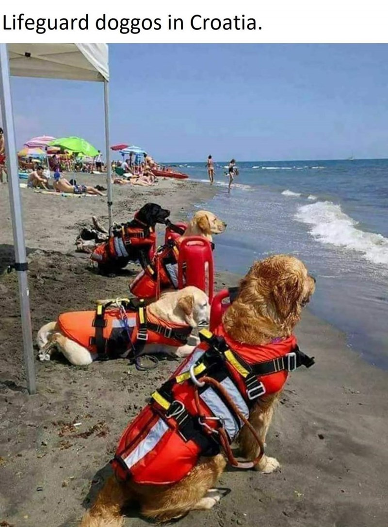 Lifejacket - Lifeguard doggos in Croatia.