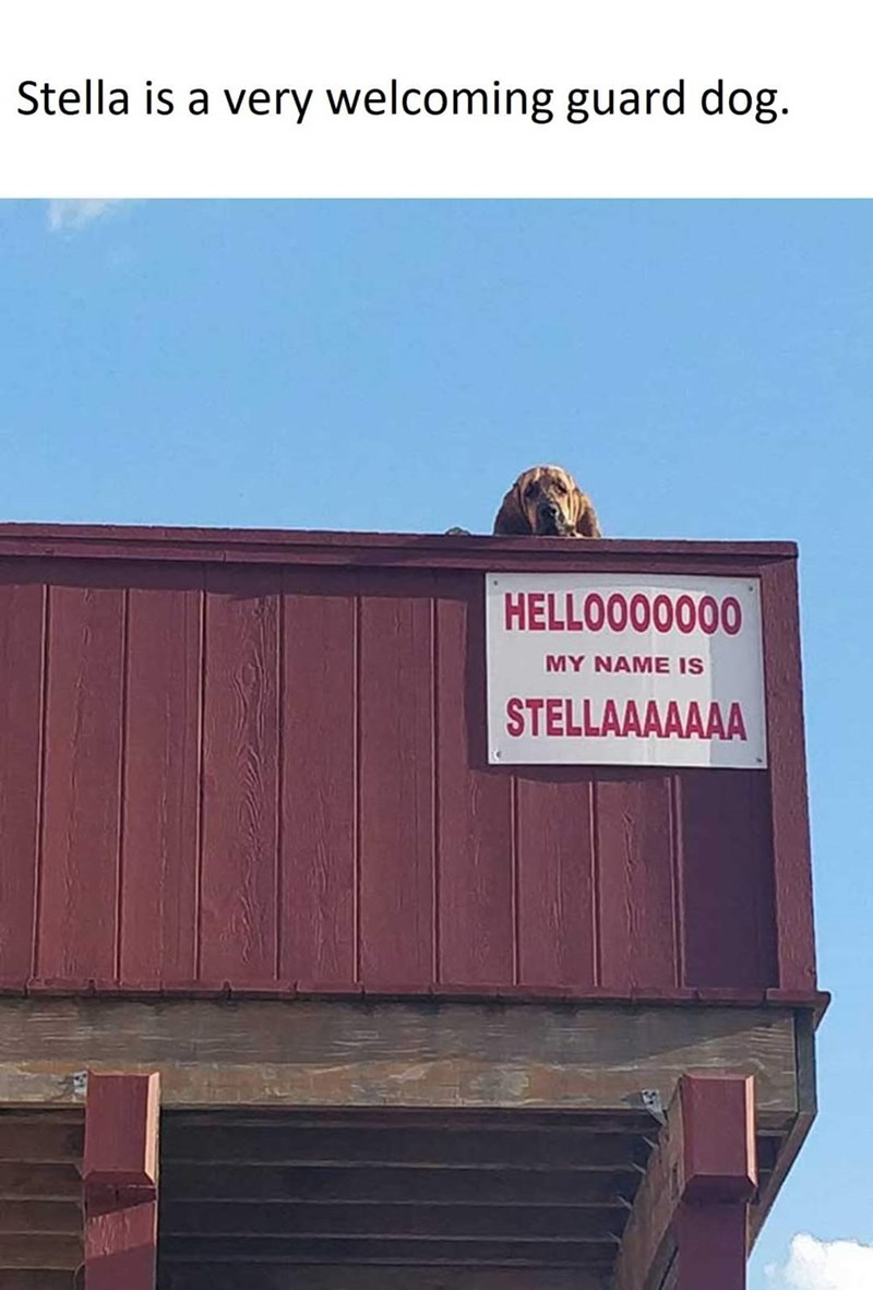 Advertising - Stella is a very welcoming guard dog. HELLOO00000 MY NAME IS STELLAAAAAAA