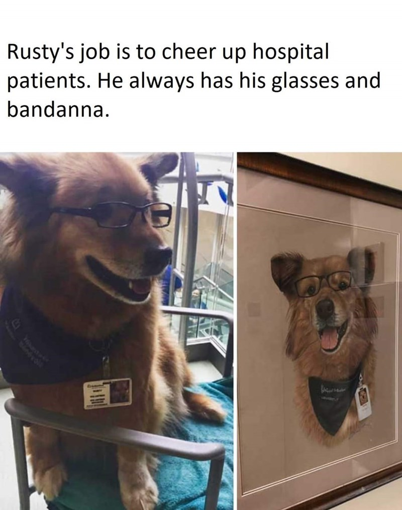 Dog - Rusty's job is to cheer up hospital patients. He always has his glasses and bandanna. 76hastaAk