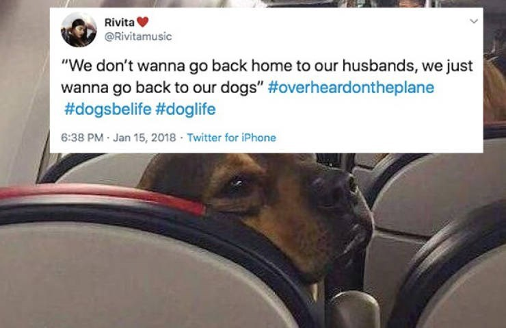 "Canidae - Rivita @Rivitamusic ""We don't wanna go back home to our husbands, we just wanna go back to our dogs"" #overheardontheplane #dogsbelife #doglife 6:38 PM · Jan 15, 2018 · Twitter for iPhone"