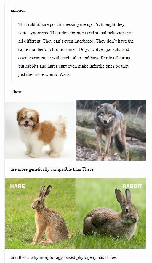 Vertebrate - aplpaca: That rabbit/hare post is messing me up. I'd thought they were synonyms. Their development and social behavior are all different. They can't even interbreed. They don't have the same number of chromosomes. Dogs, wolves, jackals, and coyotes can mate with each other and have fertile offspring but rabbits and hares cant even make infertile ones bc they just die in the womb. Wack. These are more genetically compatible than These HARE RABBIT and that's why morphology-based phylo