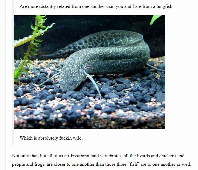 "Organism - Are more distantly related from one another than you and I are from a lungfish Which is absolutely fuckin wild. Not only that, but all of us air-breathing land vertebrates, all the lizards and chickens and people and frogs, are closer to one another than those three ""fish"" are to one another as well."