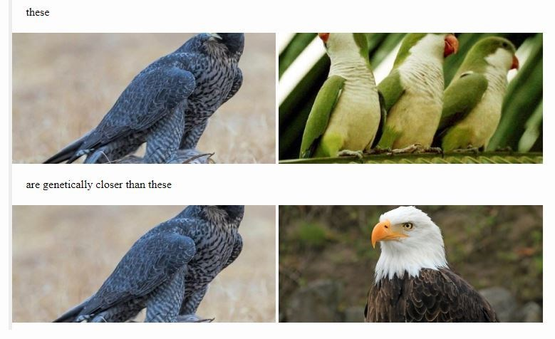 Bird - these genetically closer than these are