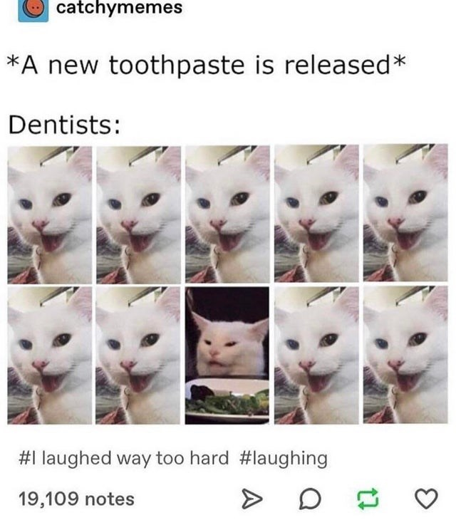 Cat - catchymemes *A new toothpaste is released* Dentists: #1 laughed way too hard #laughing 19,109 notes