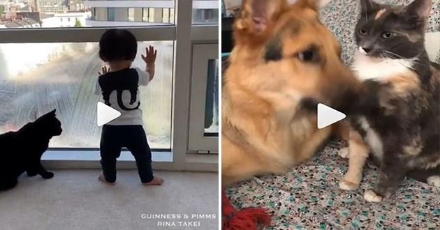 instagram cats videos funny