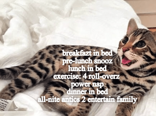 Cat - breakfazt in bed pre-lunch snooz lunch in bed exercise: 4 roll-overz power nap dinner in bed all-nite antics 2 entertain family