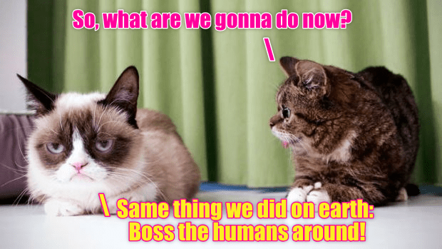 Cat - So, what are we gonna do now? Same thing we didonearth: Boss the humans around!