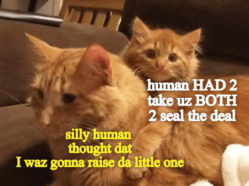 Cat - Cat - human HAD 2 take uz BOTH 2 seal the deal silly human thought dat I waz gonna raise da little one