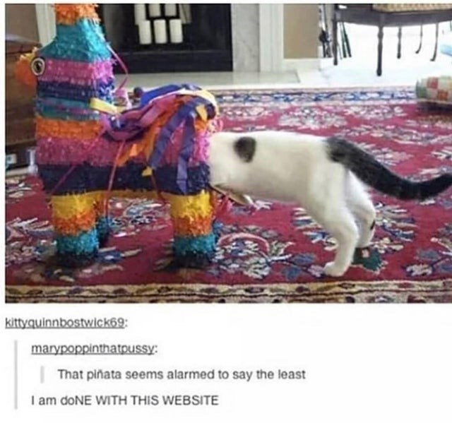 Yellow - kittyquinnbostwick69: marypoppinthatpussy: That piñata seems alarmed to say the least I am doNE WITH THIS WEBSITE
