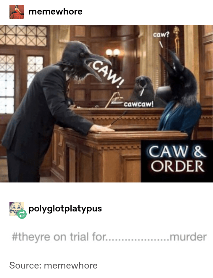 Furniture - memewhore caw? CAW! cawcaw! CAW & ORDER polyglotplatypus ....murder #theyre on trial for.. Source: memewhore