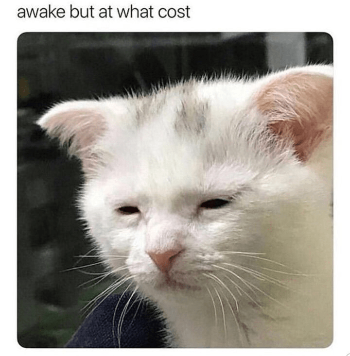 Cat - awake but at what cost
