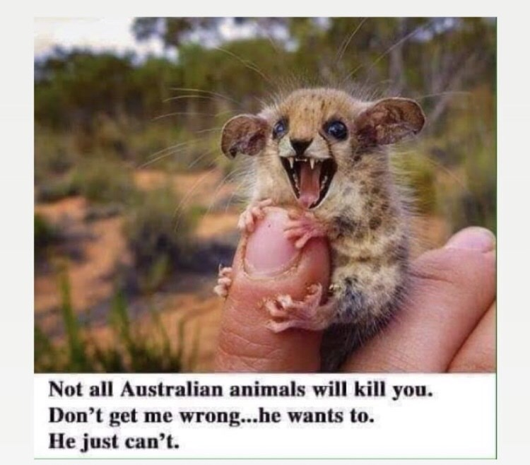 Facial expression - Not all Australian animals will kill you. Don't get me wrong...he wants to. He just can't.