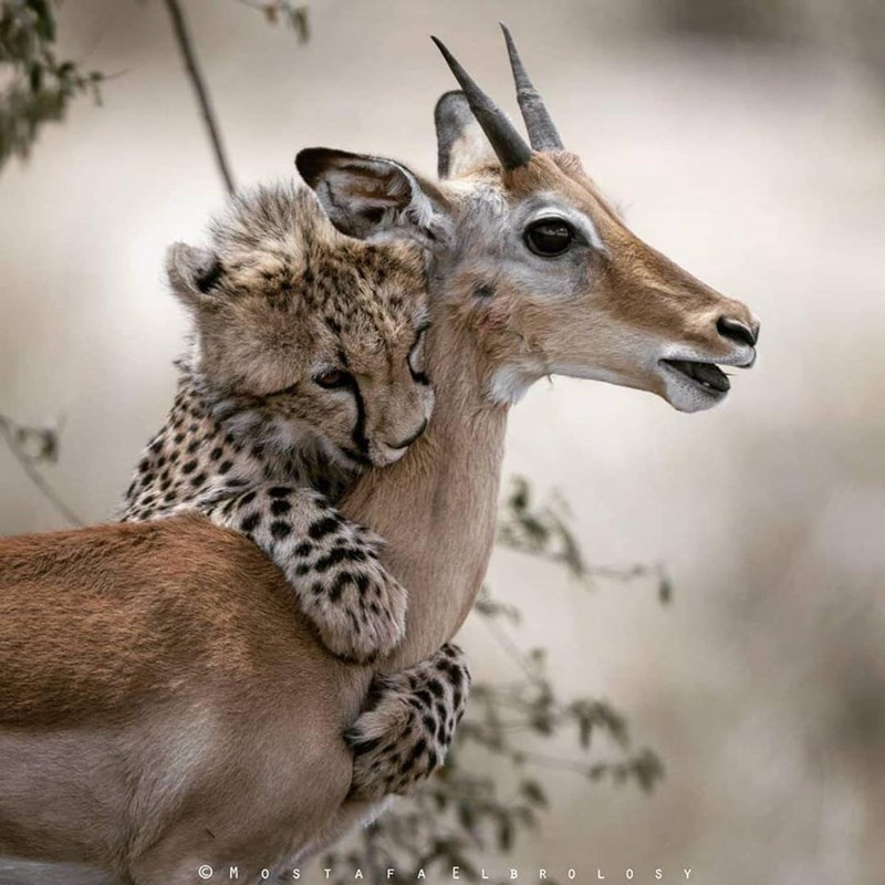 Mammal - © M O S TA F AEL BR OL oSY