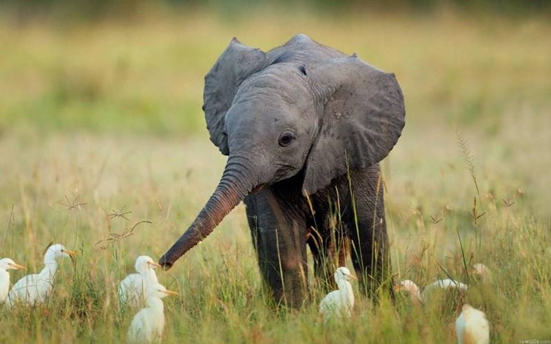 Elephant - rewalls.com
