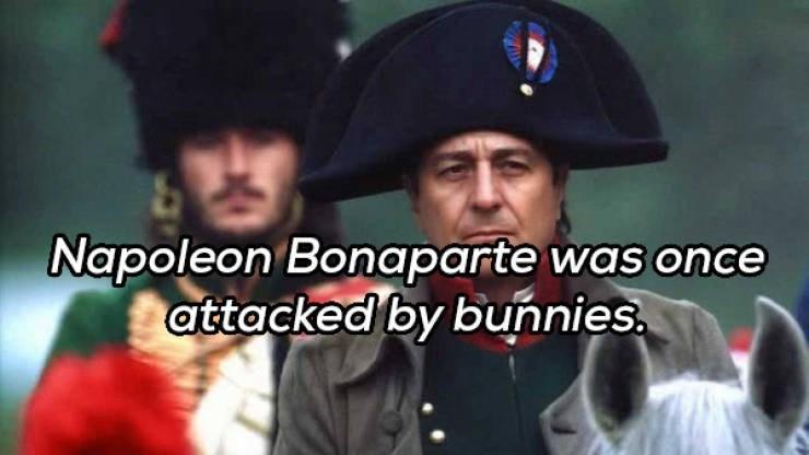 Cap - Napoleon Bonaparte was once attacked by bunnies.