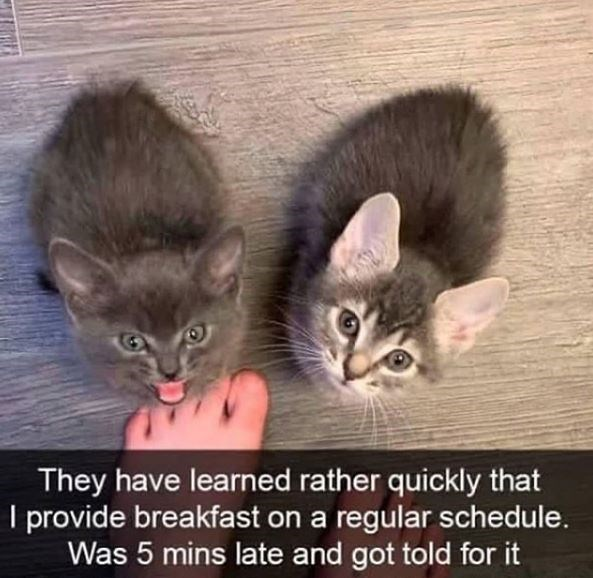 Cat - They have learned rather quickly that I provide breakfast on a regular schedule. Was 5 mins late and got told for it