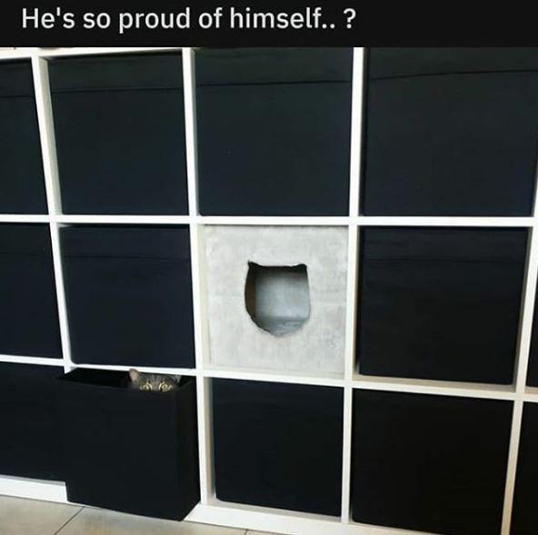 Furniture - He's so proud of himself.. ?