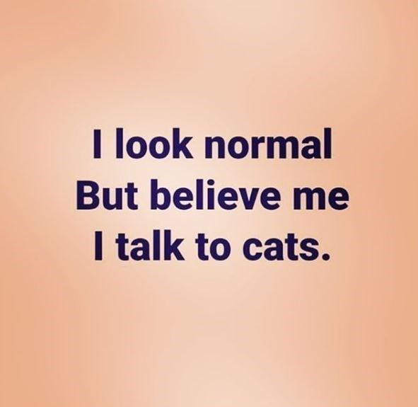 Text - I look normal But believe me I talk to cats.