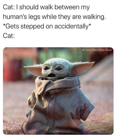Yoda - Cat: I should walk between my human's legs while they are walking. *Gets stepped on accidentally* Cat: fb. com/Baby Yoda Vibes
