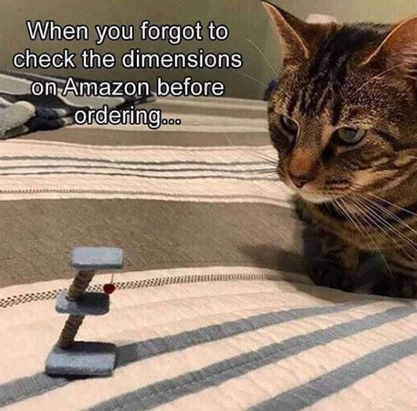 Cat - When you forgot to check the dimensions on Amazon before ordering..