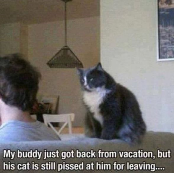 Cat - My buddy just got back from vacation, but his cat is still pissed at him for leaving..