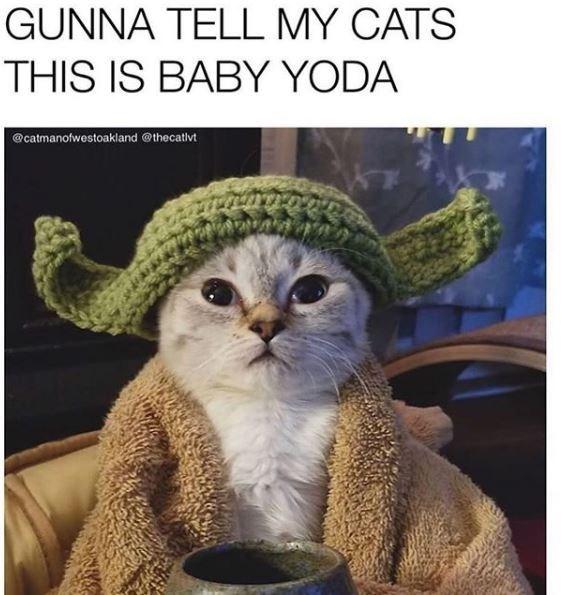 Cat - GUNNA TELL MY CATS THIS IS BABY YODA @catmanofwestoakland @thecativt