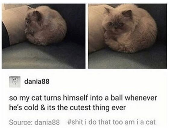 Cat - dania88 so my cat turns himself into a ball whenever he's cold & its the cutest thing ever #shit i do that too am i a cat Source: dania88