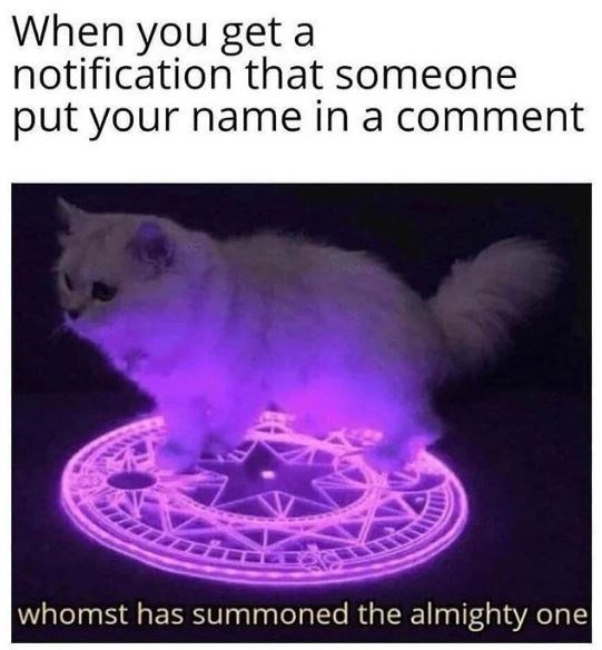Cat - When you get a notification that someone put your name in a comment whomst has summoned the almighty one