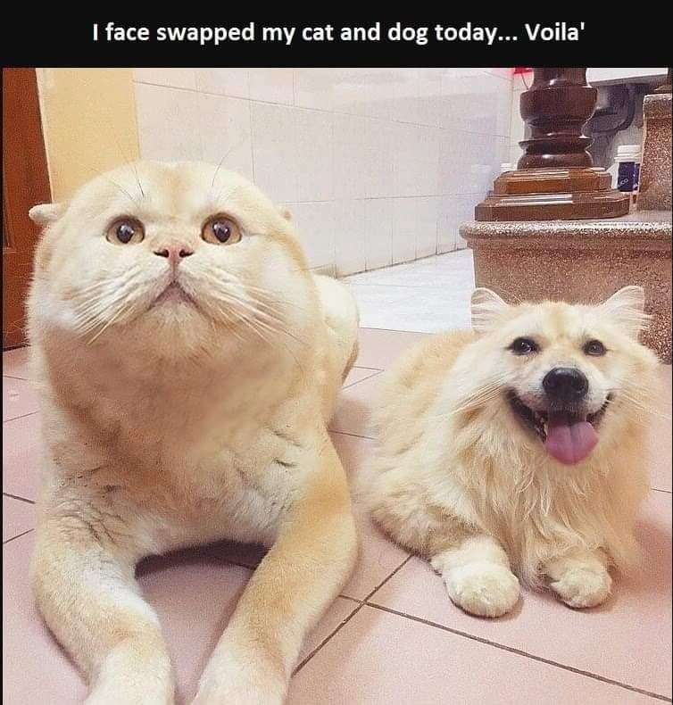 Mammal - I face swapped my cat and dog today... Voila'