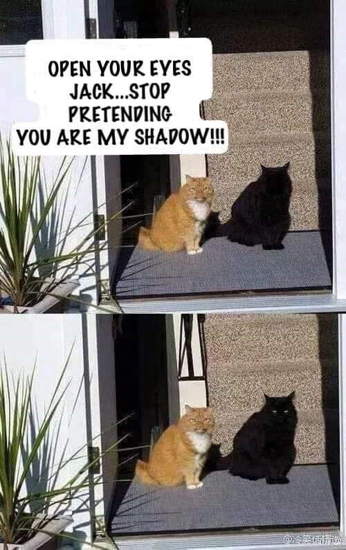 Cat - OPEN YOUR EYES JACK..STOP PRETENDING YOU ARE MY SHADOW!!