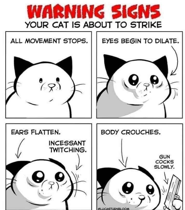 White - WARNING SIGNS YOUR CAT IS ABOUT TO STRIKE ALL MOVEMENT STOPS. EYES BEGIN TO DILATE. EARS FLATTEN. BODY CROUCHES. INCESSANT TWITCHING. GUN COCKS SLOWLY. lOLUCASTURNELOOM