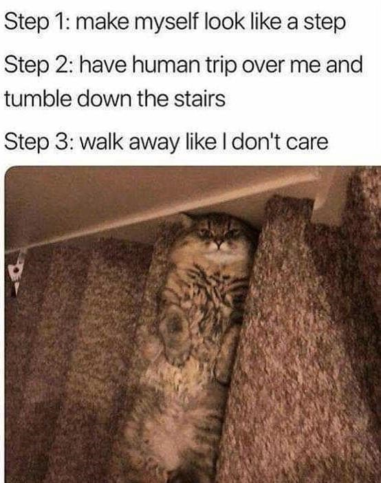 Text - Step 1: make myself look like a step Step 2: have human trip over me and tumble down the stairs Step 3: walk away like I don't care